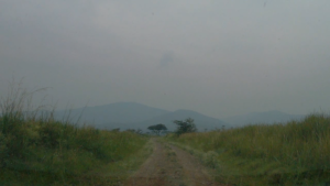 Sample video frames from Nairobi National Park (left, center) and Ruma National Park (right)
